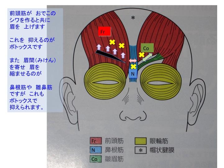 眉の動き.jpg