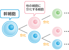 regenerative2.jpg