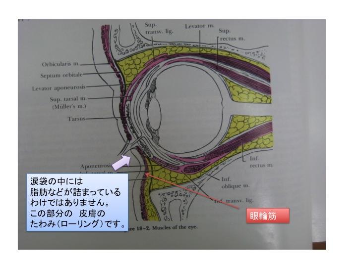 涙袋スライド5.jpg